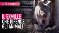 Dona il tuo 5x Mille ad Animal Equality Italia