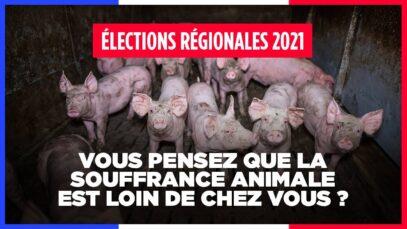 Élections régionales 2021 – Vous pensez que la souffrance animale est loin de chez vous ?