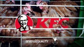 KFC: #FinalmenteAlloScoperto