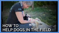 Lessons on How to Help Dogs in the field with PETA