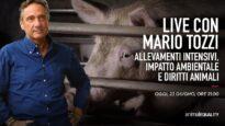 LIVE CON MARIO TOZZI: allevamenti intensivi, impatto ambientale e diritti animali