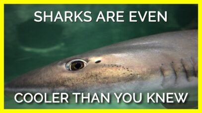 Must See Facts About Sensitive Sharks for Shark Week