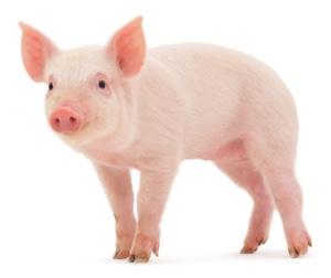 I numeri della strage Animale | Animal Killing Counter