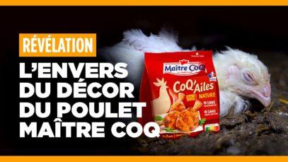 Que se cache-t-il derrière les publicités Maître Coq ?