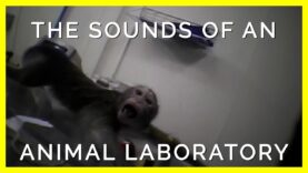 The Sounds of Animals Trapped in Labs Will Haunt You
