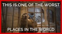 This Thai zoo is one of the worst places in the world.