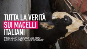 Tutta la verità sui macelli italiani