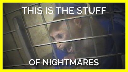 What Animals in Labs Go Through Is the Stuff of Nightmares