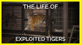 Why You Should Never Visit Any Attraction That Exploits Animals