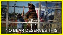 Bears of Bearadise Ranch Deserve Better