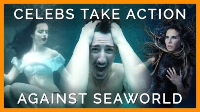 Celebrities Are Teaming Up With PETA to Stop SeaWorld FromExploiting Animals