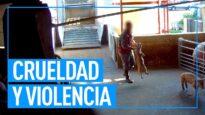 Crueldad y violencia sistemática en cárnica líder en Italia