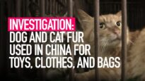 Dog and cat fur used for bags, toys and clothes in China.