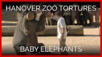 Hanover Zoo Tortures Baby Elephants