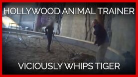 Hollywood Animal Trainer Viciously Whips Young Tiger
