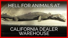Investigation Reveals Hell on Earth for Animals at California Dealer Warehouse