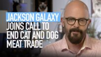 Jackson Galaxy Calls for an End to the Dog and Cat Meat Trade