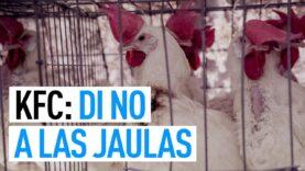 KFC: Di NO a las JAULAS