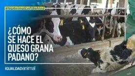 ¿Qué hay detrás de la producción del queso Grana Padano?