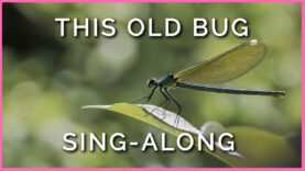 Teachkind and PETA Kids Present: 'This Old Bug' Sing-Along