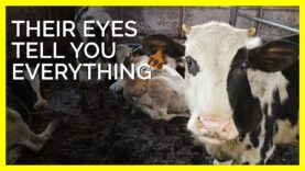Their Eyes Tell You Everything  #shorts