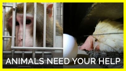 These Animals Desperately Need Your Help This August