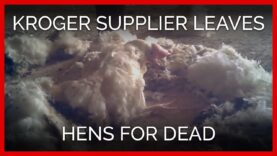This Hen Was Left to Die on the Floor of a Massive Egg Farm