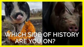 Which Side of History Are You On? Slaughterhouse vs. Sanctuary #Shorts