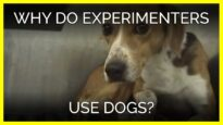 Why Do Experimenters Use Dogs?