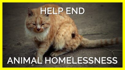 You Can Help End the Homeless Animals Crisis