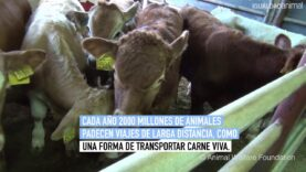 Animales a la deriva por el mediterráneo durante meses serán sacrificados en el Puerto de Cartagena