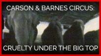 Carson & Barnes Circus: Cruelty Under the Big Top