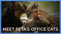 Cat Trio Goes From Being Homeless to Living at PETA's Headquarters