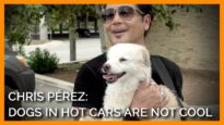Chris Pérez: It's Not Cool to Leave Your Dog in a Hot Car