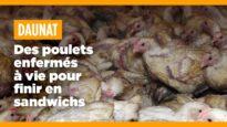 Daunat soutient l'enfermement à vie des poulets