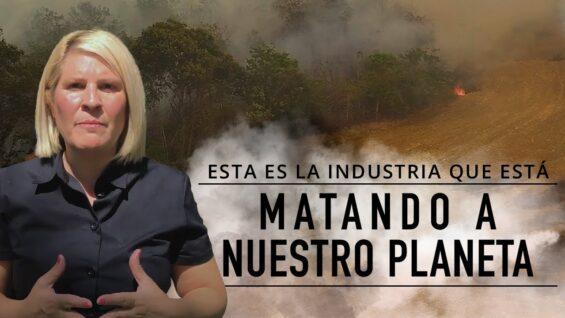 DEFORESTACIÓN provocada por la industria de la carne   ¿Por qué arde Brasil?