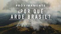 Descubre qué industria está detrás de la deforestación masiva en Brasil