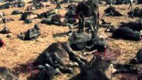 Fermiamo il sacrificio di Gadhimai
