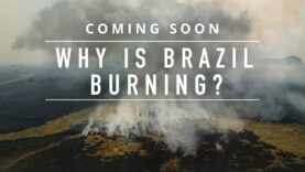 Find out which industry is driving mass deforestation in Brazil