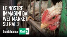 Le nostre nuove immagini dai wet market su Rai 3!