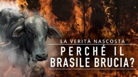L'industria della carne dietro deforestazione e incendi: ecco perché il Brasile brucia