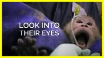 Look Into the Eyes of Animals Experimenters Torture in Labs #shorts