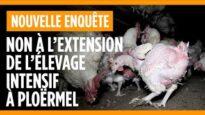 Non à l'extension de l'élevage intensif de poules et de coqs reproducteurs à Ploërmel