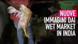 Nuova inchiesta: nei wet market in India, dove nulla è cambiato