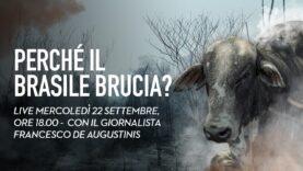 Perché il Brasile brucia? L'industria della carne dietro la deforestazione