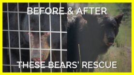 PETA Helped Rescue These Bears Who Get To Spend the Rest of Their Days in Harmony