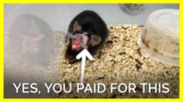 The U.S. Government Wastes YOUR Tax Dollars on Tormenting Animals #shorts