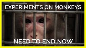 Torturing and Terrifying Monkeys Isn't Science