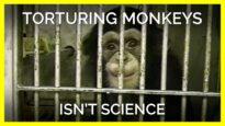 Torturing Monkeys Isn't Science, It's an Atrocity