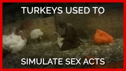 Turkeys Used to Simulate Sex Acts at 'Humane' Farms Supplying Top Grocers